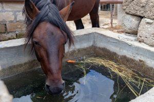 Horse using a concrete water trough.