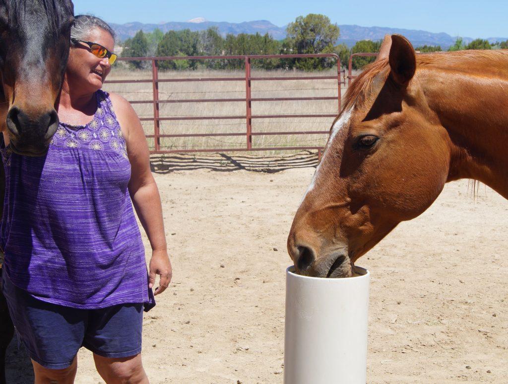 easy horse watering