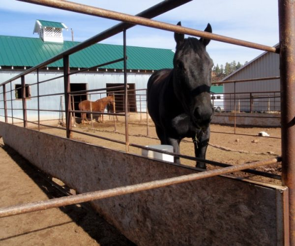 black_horse_standing_next_to_non_electric_automatic_waterer_splitting_stalls