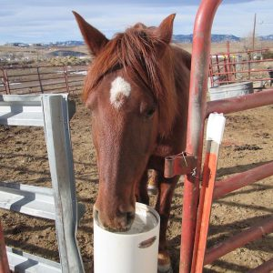 clean_water_from_non_electric_horse_waterer