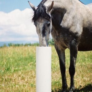 dapple_gray_horse_getting_cool_drinking_of_water_from_automatic_waterer_in_summer