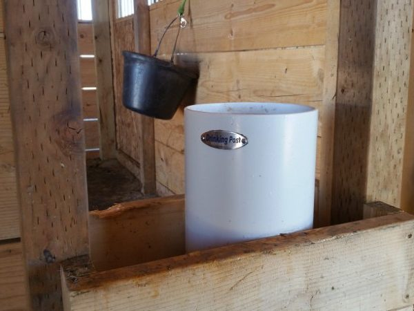 drinking_post_automatic_waterer_splitting_two_stalls_in_a_barn
