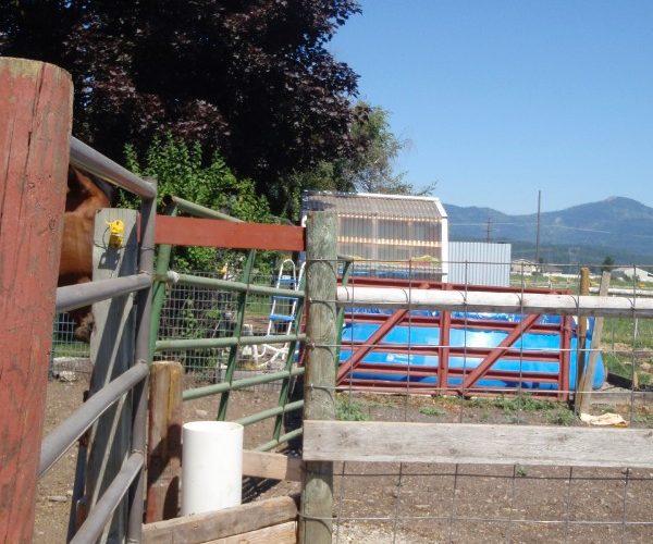 drinking_post_waterer_split_between_three_pastures