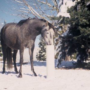 frost_free_horse_waterer_being_used_in_light_snow