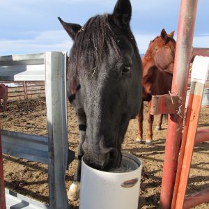 horse_waterer_automatic_frost_free_non_electric