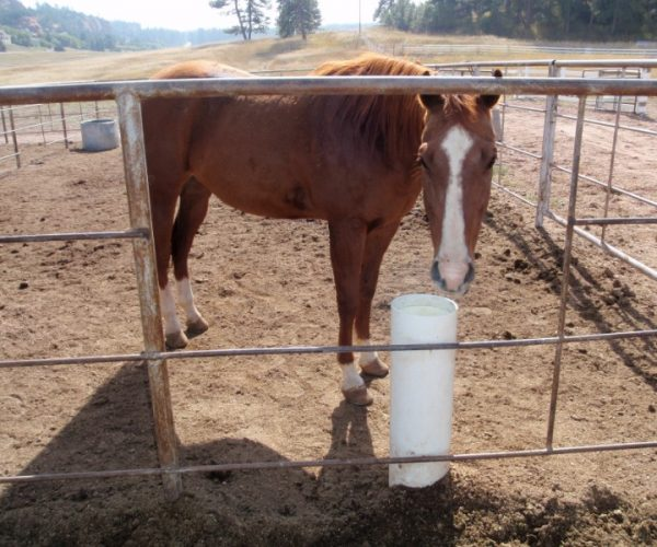 non_electric_waterer_installed_to_be_used_from_both_sides_of_fencing