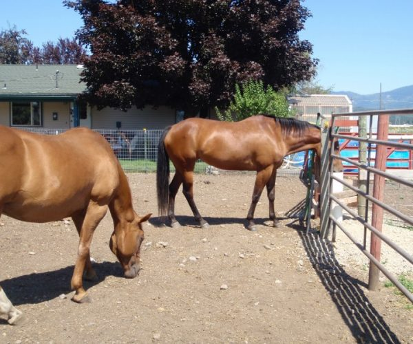 three_pastures_two_horses_one_waterer.JPG