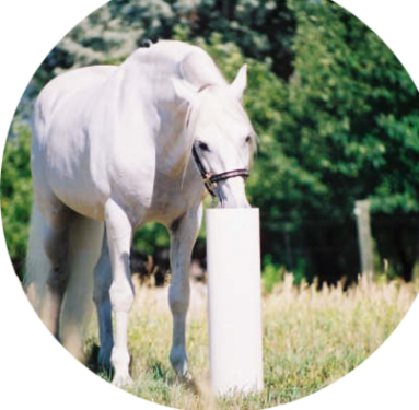 white horse using Post - circle crop - reversed - resized 400 px