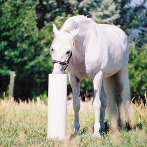 white_horse_using_automatic_waterer_by_drinking_post_in_field_with_green_trees_and_fence_line_in_background